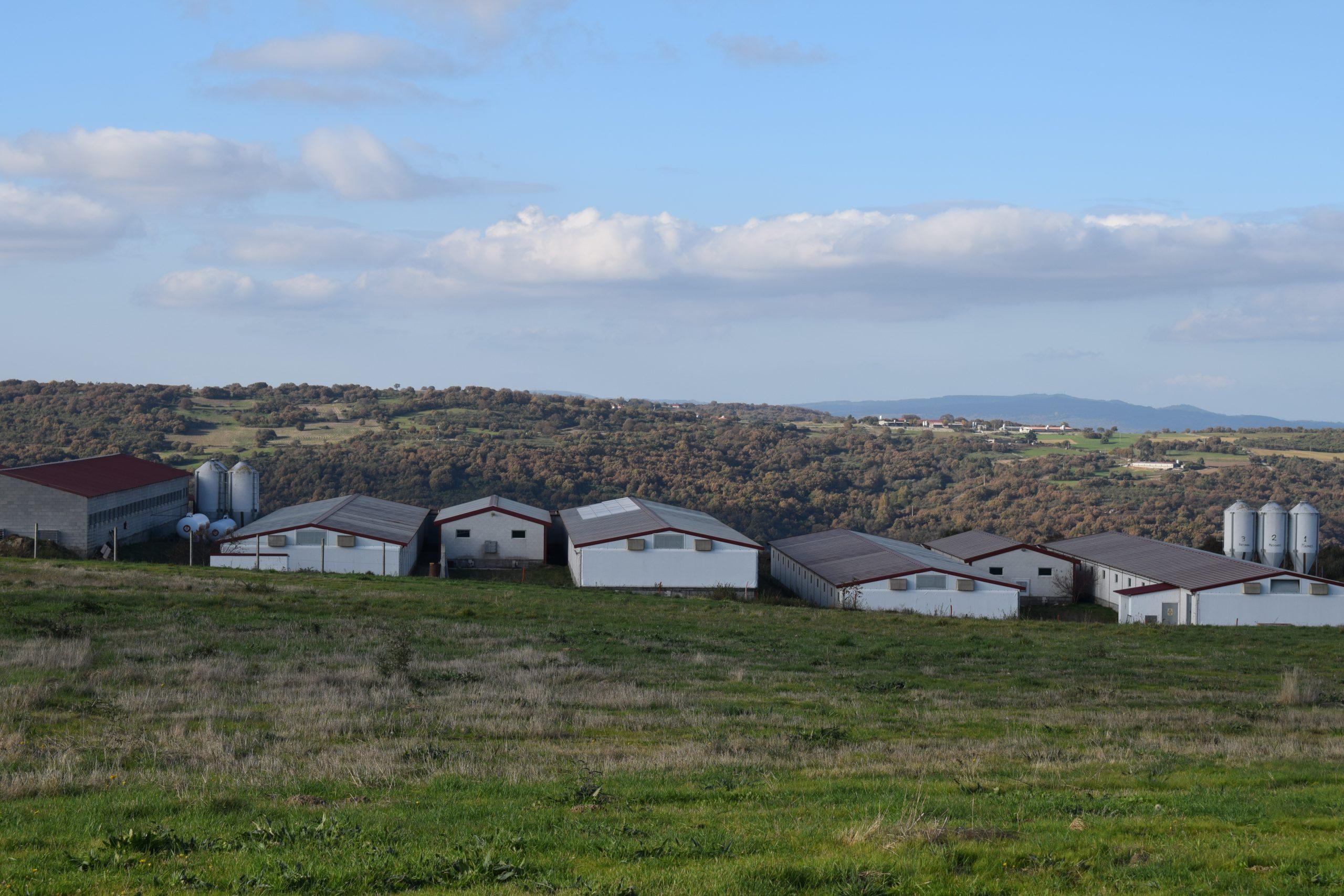 granjas gallegas